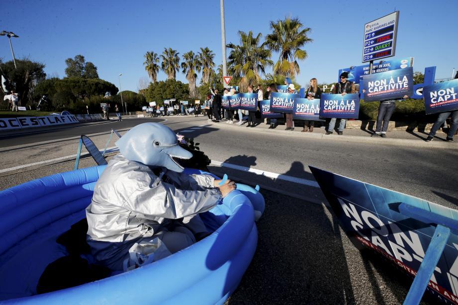 Manifestation hier après-midi contre la captivité des dauphins et des orques du Marineland.