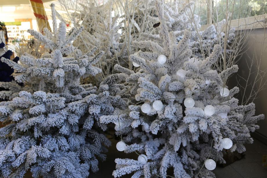 Après les fêtes, les sapins de Noël doivent être déposés dans les déchetteries communautaires. À Menton et Roquebrune-Cap-Martin, des lieux de dépôt sont aménagés dans certains quartiers.(Archive N.-M.)