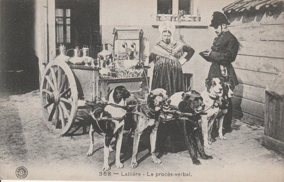 Les chiens les plus robustes et les plus grands étaient employés pour tracter, généralement, des charrettes de laitiers.
