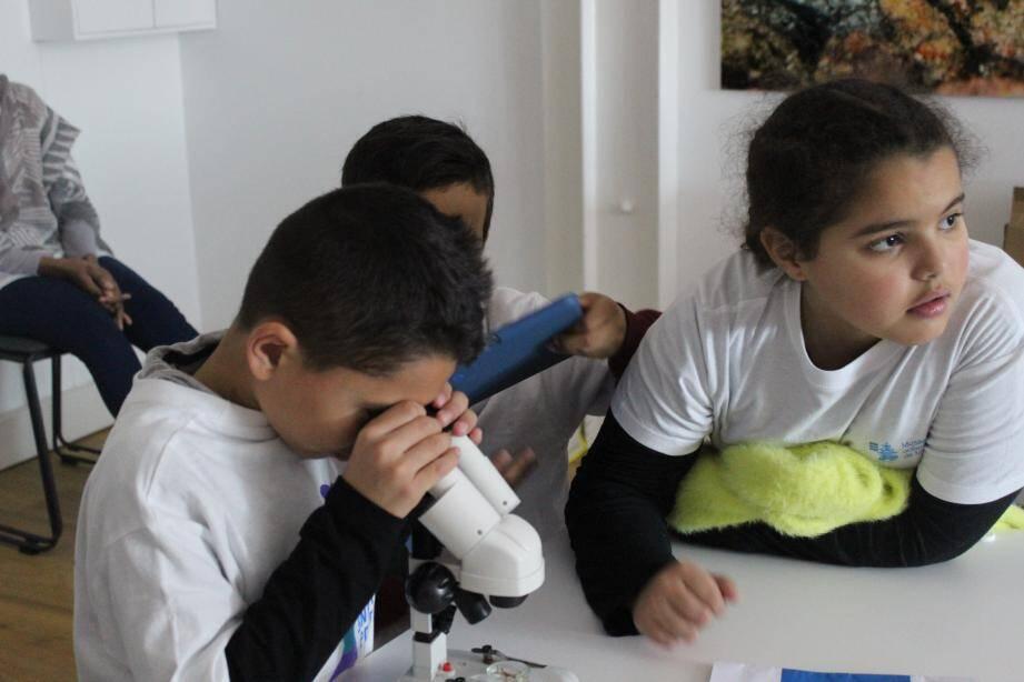 Lors de la visite, les apprentis écolos examinent au microscope l'organisme d'une anémone.