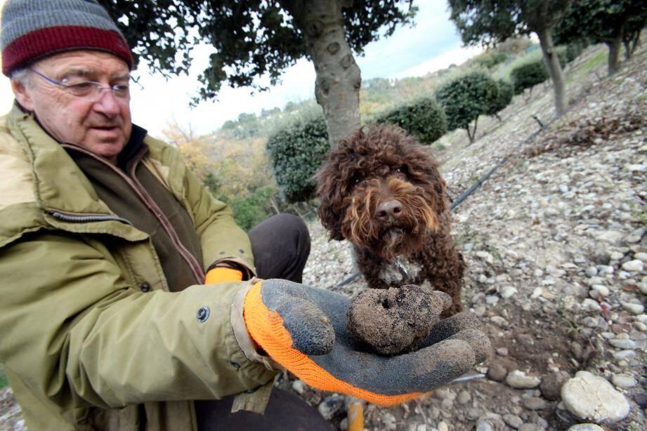 Michel Santinelli, trufficulteur près de Cagnes-sur-Mer, dresse un bilan sur ce diamant noir.