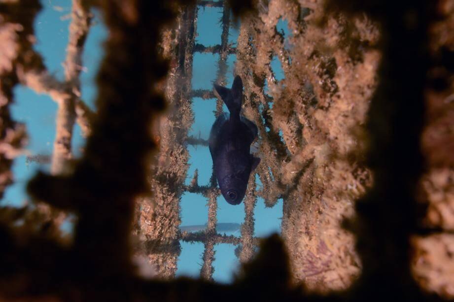 """Près de 380 poissons ont été """"aidés"""" en un an au Port Canto."""