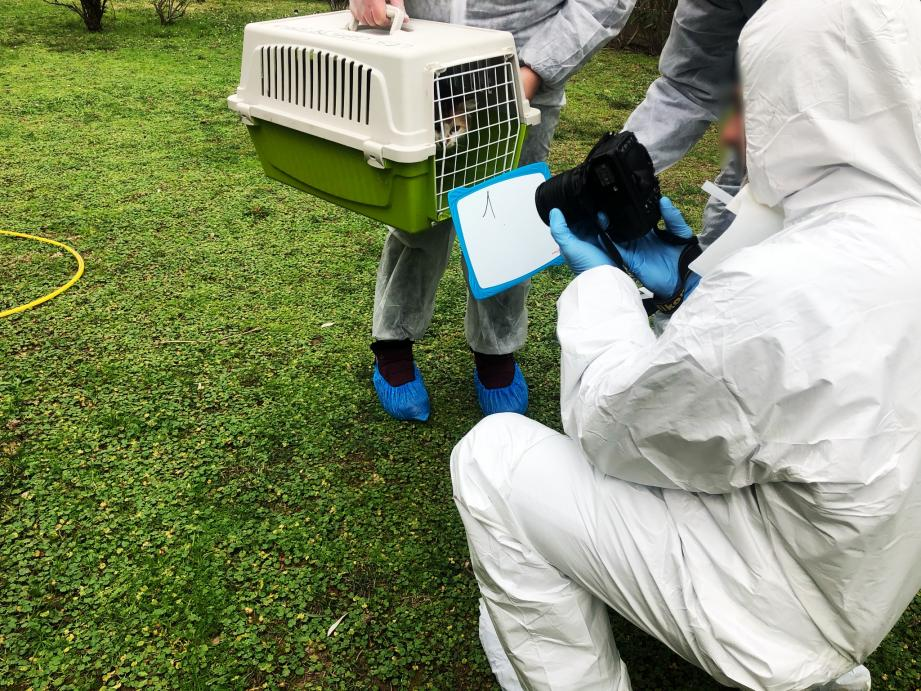 Tous les animaux ont été placés dans des lieux d'accueils gérés par les associations locales.(DR)