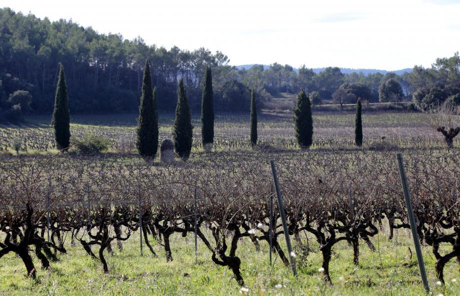 La cuvée Ursus est issue d'une parcelle d'1,5 hectare sur le domaine du Clos de l'ours. Ce vin rouge est composé à 90% de syrah et 10% de mourvèdre. Une barrique de la cuvée 2019 sera élevée pendant un an aux Menuires (Savoie).