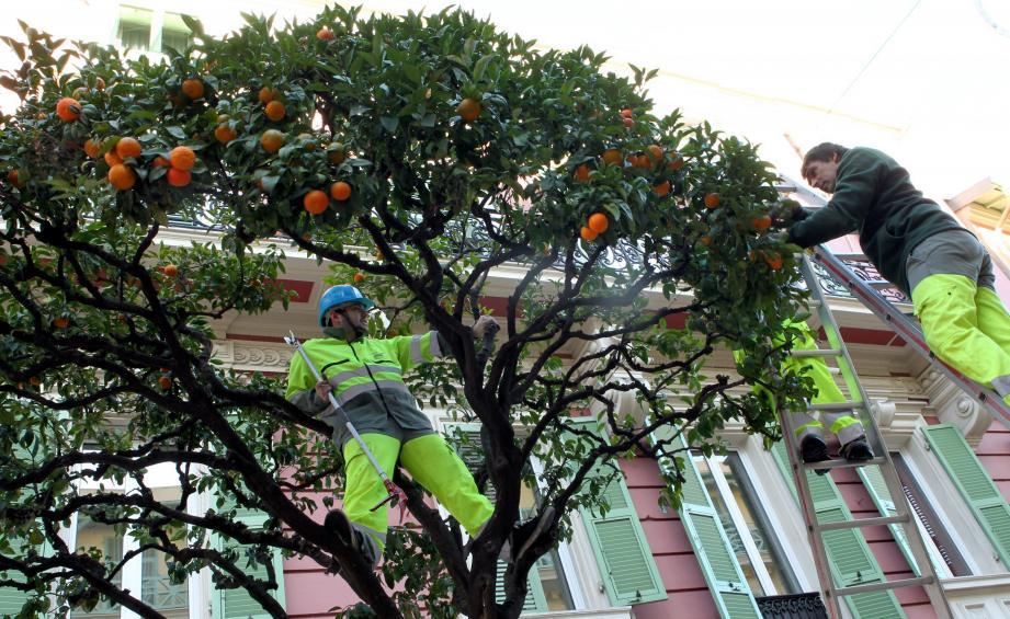 Environ 3 tonnes d'oranges amères ont été livrées à L'Orangerie.