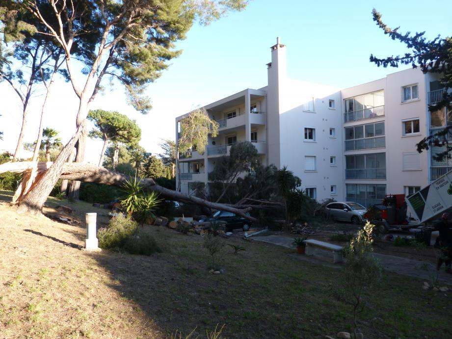 L'arbre s'est abattu sur le parking de la résidence, écrasant une voiture et endommageant une autre.
