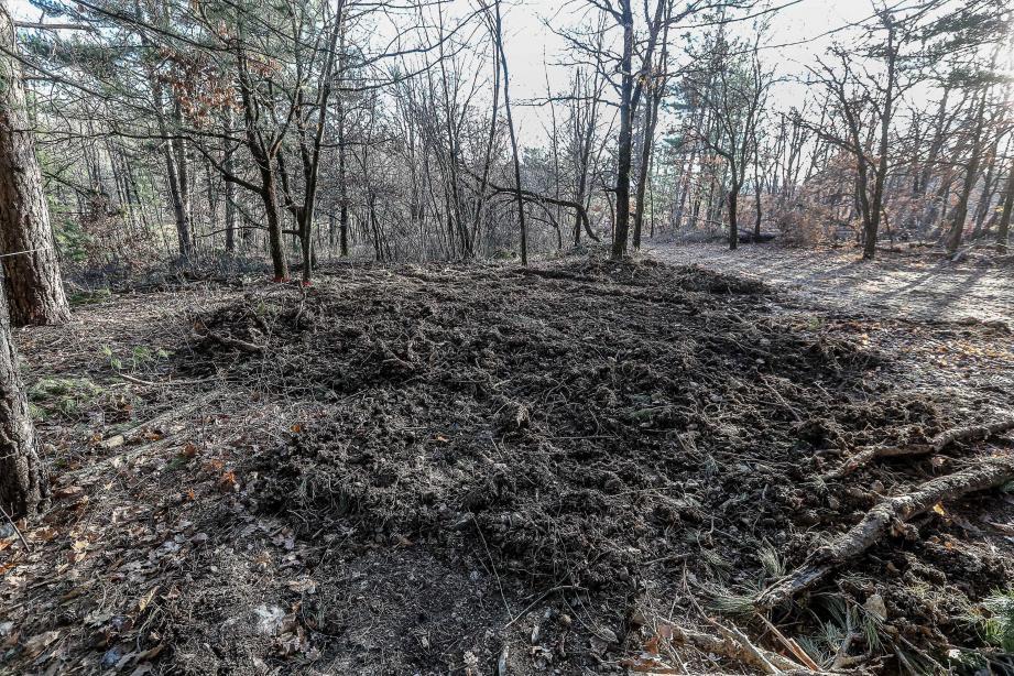 C'est dans ce bois, au lieu-dit Les Marchands à Revest-du-Bion que les gendarmes ont découvert les deux corps enterrés.