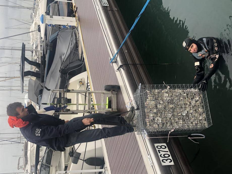 Le personnel de la société Ecocéan a mis en place quarante-six  nurseries à poissons dans le port.
