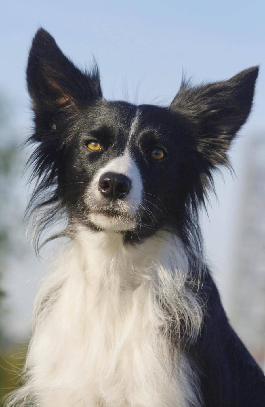 La chienne, âgée d'un an, avait été recueillie six mois plus tôt par la propriétaire.
