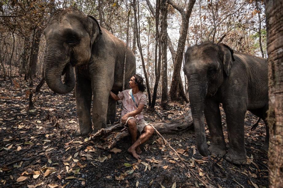 Photo diffusée le 29 mars 2020 par la Thai Elephant Alliance Association d'un mahout avec ses deux éléphants, près de Chiang Mai, en Thaïlande