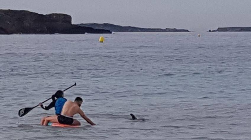 Voir un dauphin dans son habitat naturel, en liberté: un spectacle émouvant.