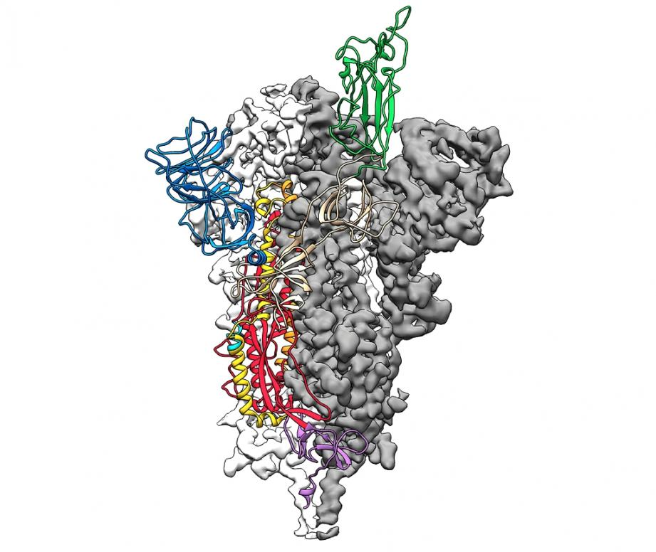 La pointe du nouveau coronavirus covid-2019