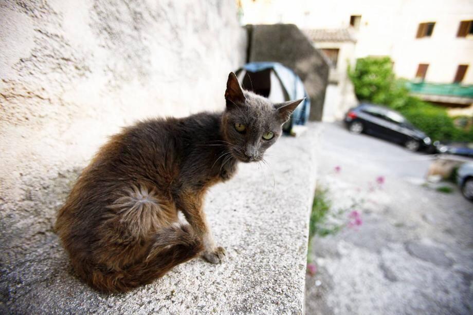 Les associations ne peuvent plus intervenir aisément sur le terrain pour porter secours aux animaux.