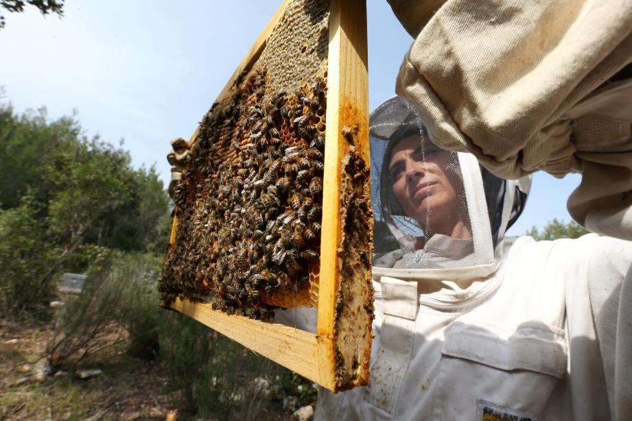 Reconvertie dans l'apiculture Sandie Monchablon, et ses amis de Bee'Osphera, mènent une multitude d'actions pour démystifier l'abeille.