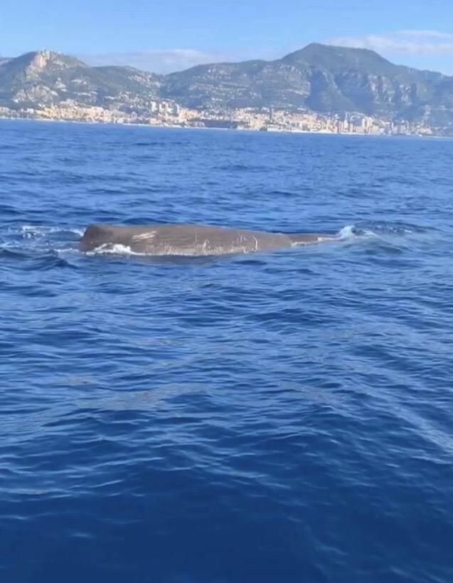 La famille Campi a observé cette baleine au large de Monaco.