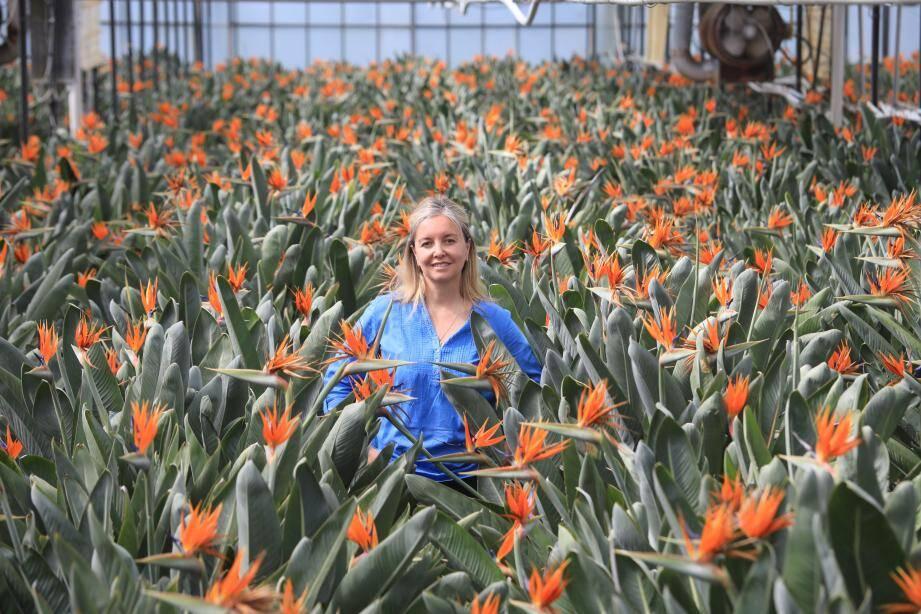 En reprenant l'exploitation familiale au décès de son père il y a 5 ans, Céline Borello a choisi de ne cultiver que des strelitzia reginae.