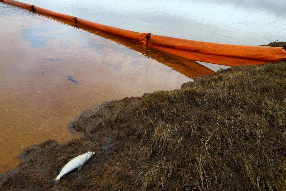 Un barrage flottant installé sur la rivière Ambarnaya pour limiter la pollution aux hydrocarbures.