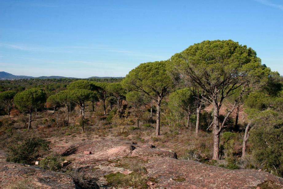 La réserve naturelle nationale de la plaine des Maures s'étend sur 5 communes du Var.