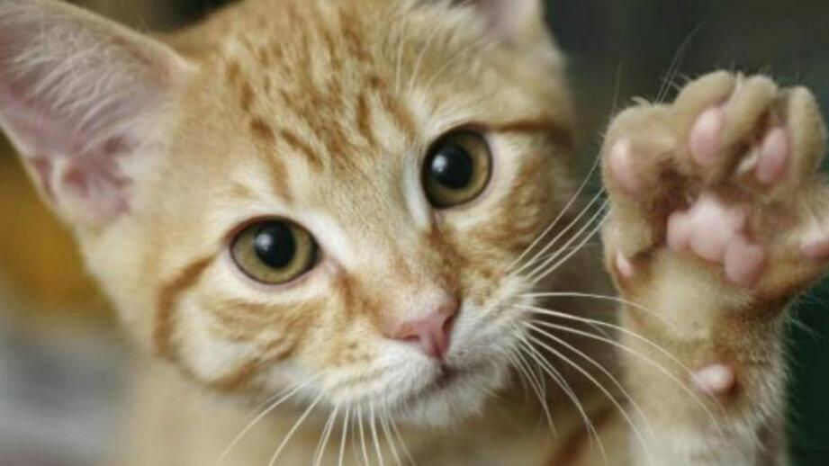 Le chat a été placé en quarantaine pour six mois (image d'illustration).