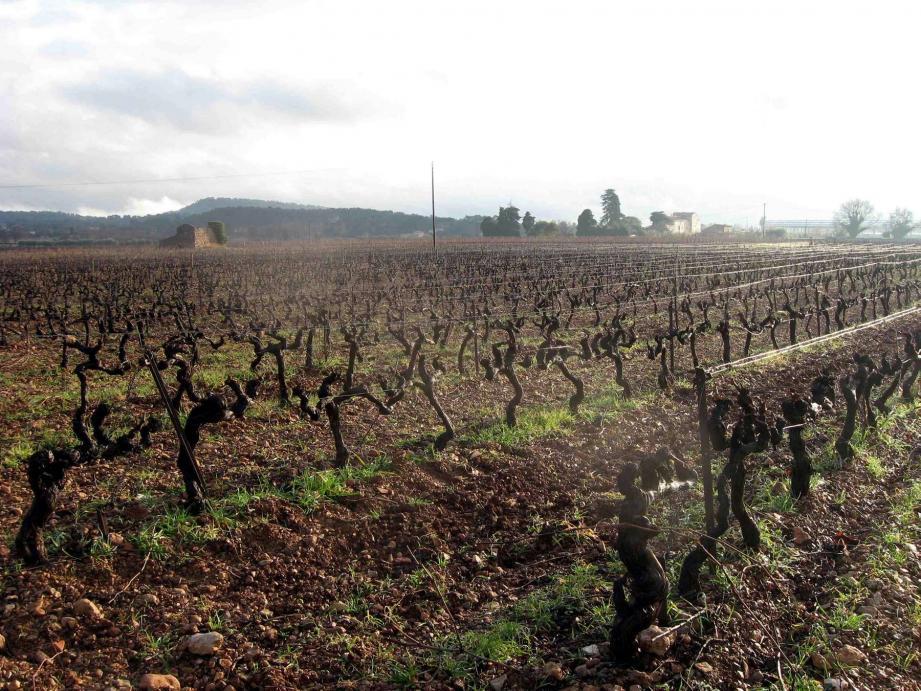 C'est pour garantir une alimentation en eau aux agriculteurs et en particulier aux viticulteurs dans les décennies à venir que le projet a été lancé.