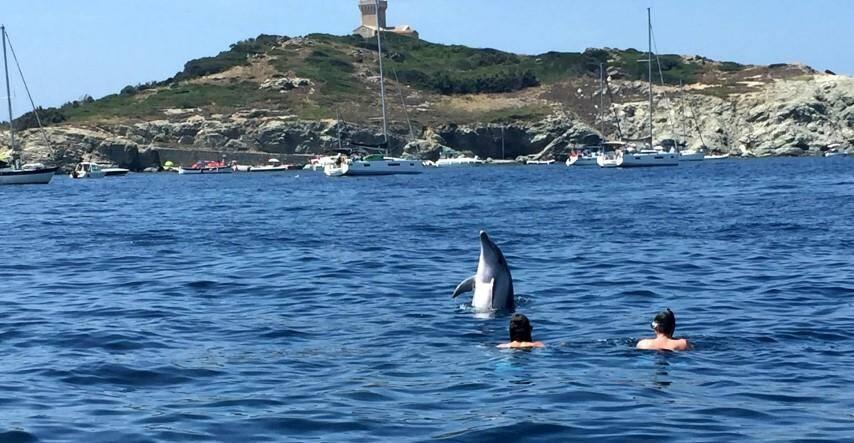 Agréable surprise lors d'une baignade à l'île du Grand-Rouveau.