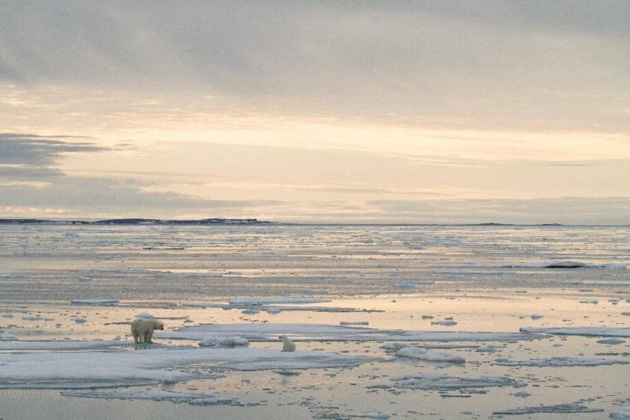 Photo transmise 17 juillet 2020 par Polar Bears International d'un ours polaire et de son ourson photographiés en 2012 près de l'archipel de  Svalbard (Norvège)