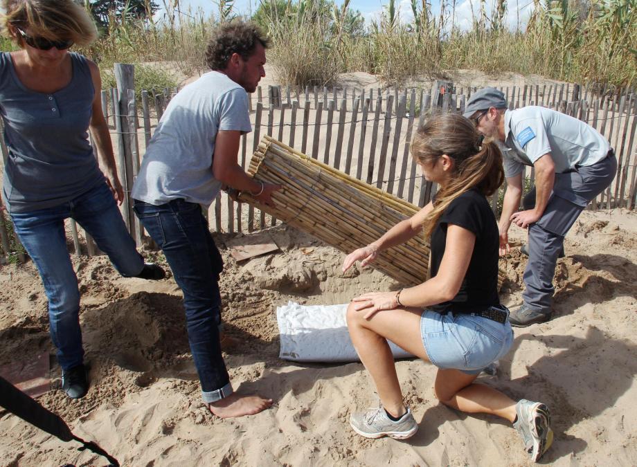 La spécialiste des tortues marines, Sidonie Catteau, était déjà venue à Fréjus, plage des Esclamandes à Saint-Aygulf, pour les mêmes raisons, à la fin de l'été 2016.   oeufs de tortues marines à st aygulf les scientifiques sont venus inspecter le nid
