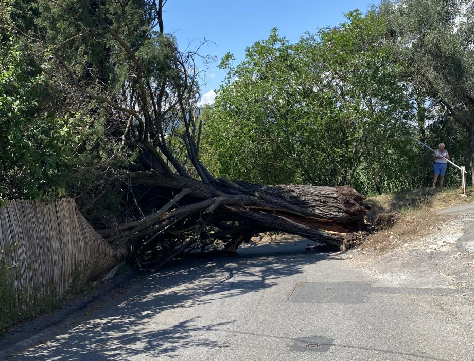 L'arbre a bloqué la circulation sur la route de Villefranche, à La Trinité