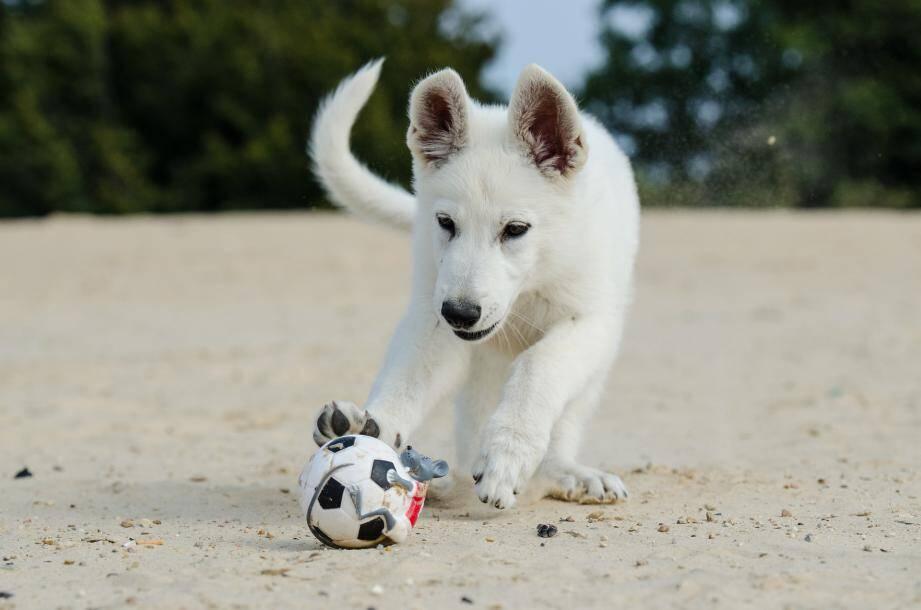 Dans le Var et les Alpes-Maritimes, il y a 53 plages et criques où les chiens sont autorisés.