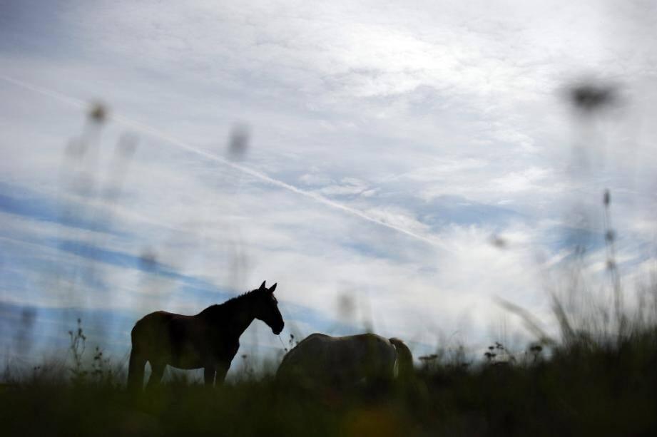 La Fédération française d'équitation a annoncé mercredi qu'elle se portait partie civile aux côtés des propriétaires de chevaux, poneys et ânes qui ont été tués ou mutilés ces derniers mois en France