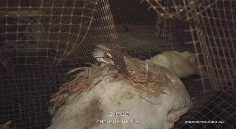 Les photos et vidéos mises en ligne sur le site de l'association de défense des animaux ont été prises en août.