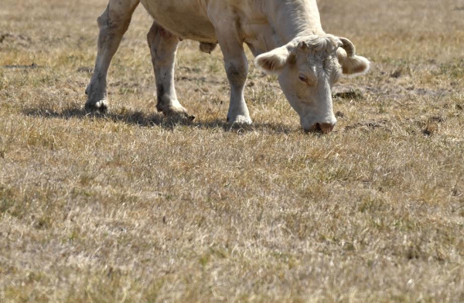 Le syndicat agricole Modef demande l'activation d'un fonds d'aide français et d'une réserve de crise européenne pour aider les éleveurs confrontés à la sécheresse