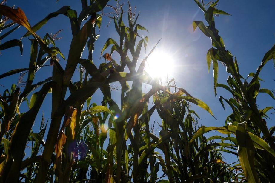 Les épisodes de sécheresse se multiplient  dans l'Hexagone, le gouvernement va accorder des aides supplementaires aux agriculteurs