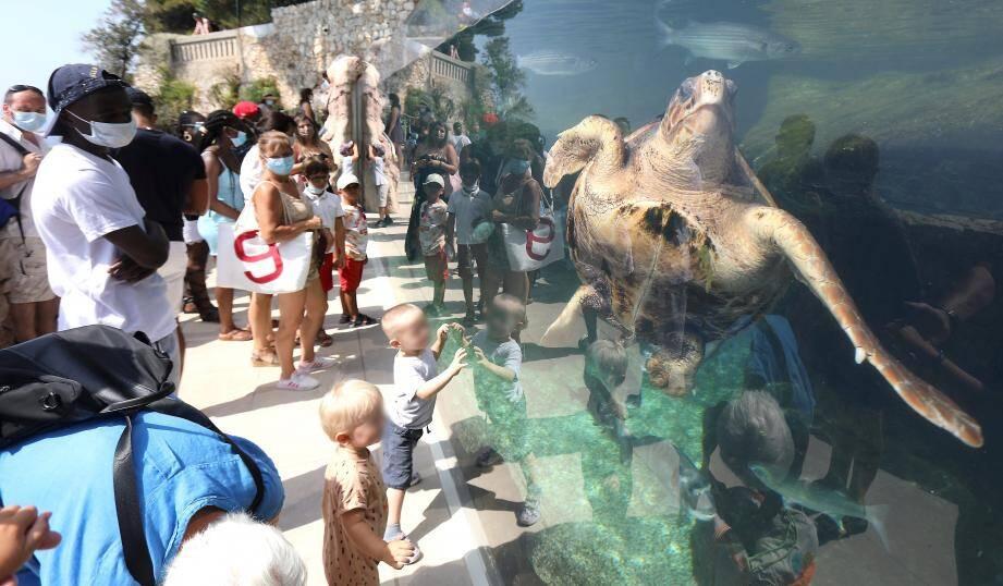Le bassin des tortues, l'une des activités préférées des visiteurs.