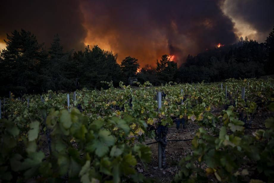 Vignobles : un incendie géant ravage la Napa Valley (USA)