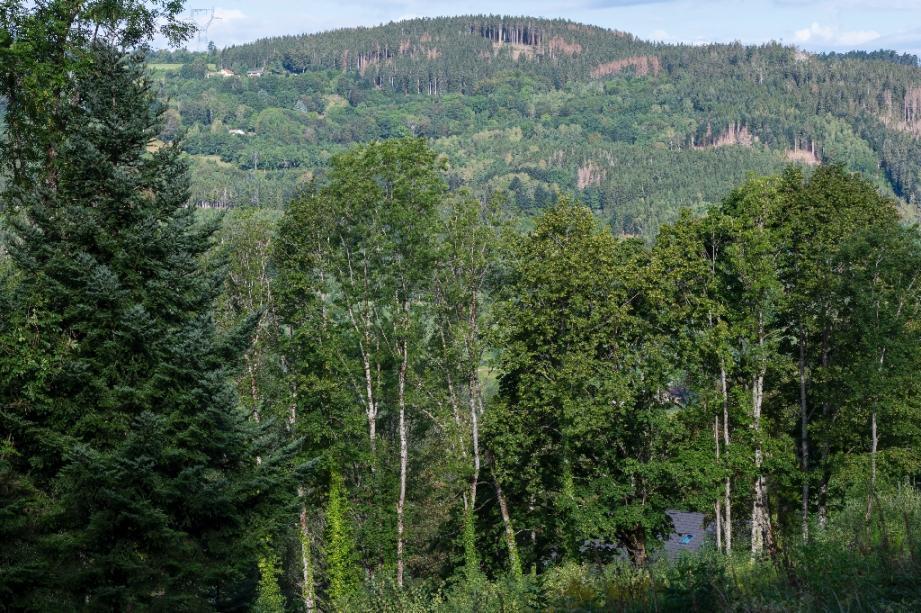 Une forêt vosgienne à Ban-Sur-Meurthe-Clefcy, le 18 août 2020