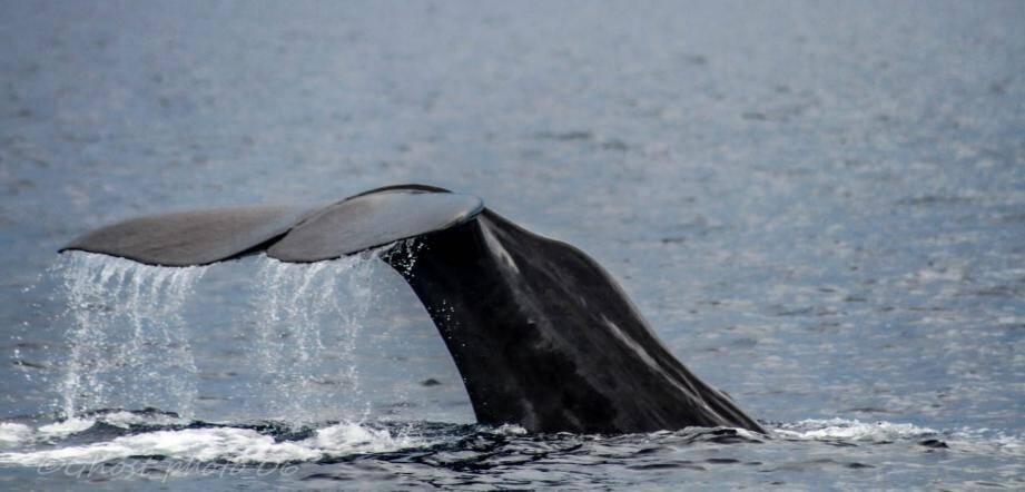 Le rorqual s'est invité à environ deux milles nautiques (3,7 km) de l'île Saint-Honorat.