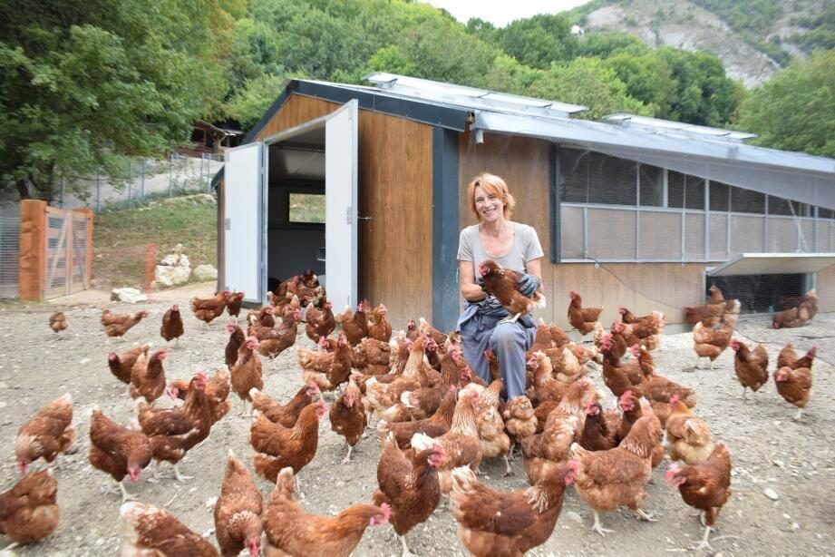 900 poules produisent des œufs en agriculture biologiques. Bientôt, la ferme en comptera 1.500.