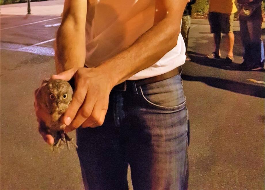 Norbert Chardon, référent de la Ligue pour la Protection des Oiseaux, s'apprête à relâcher le petit hibou.