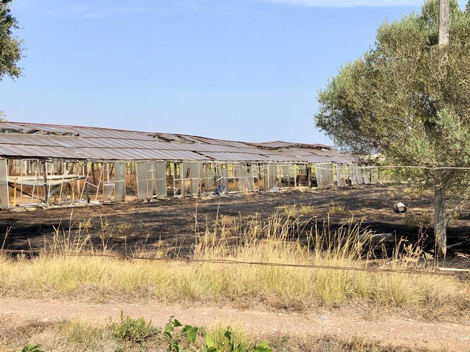 Le feu s'est propagé dans des serres désaffectées.