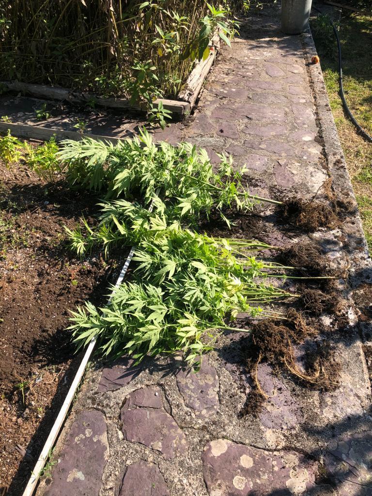 3 kilos ont été saisis, ainsi que 220 grammes d'herbes séchées.