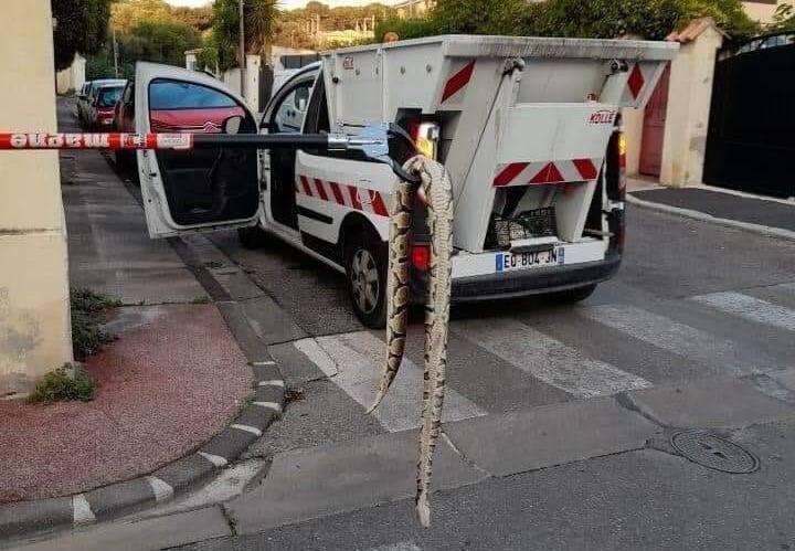 Le python a été récupéré par les agents du service propreté de la ville.