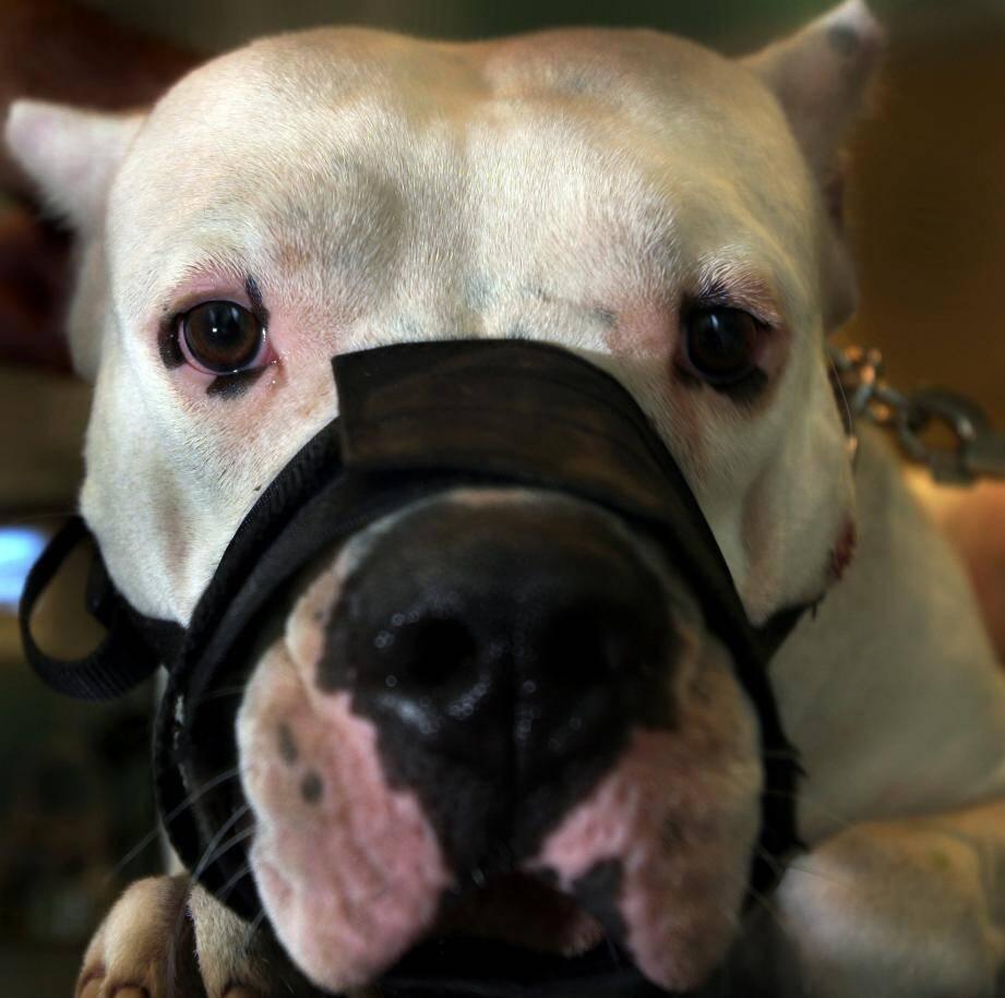 La septuagénaire a été attaquée par trois dogues argentins.