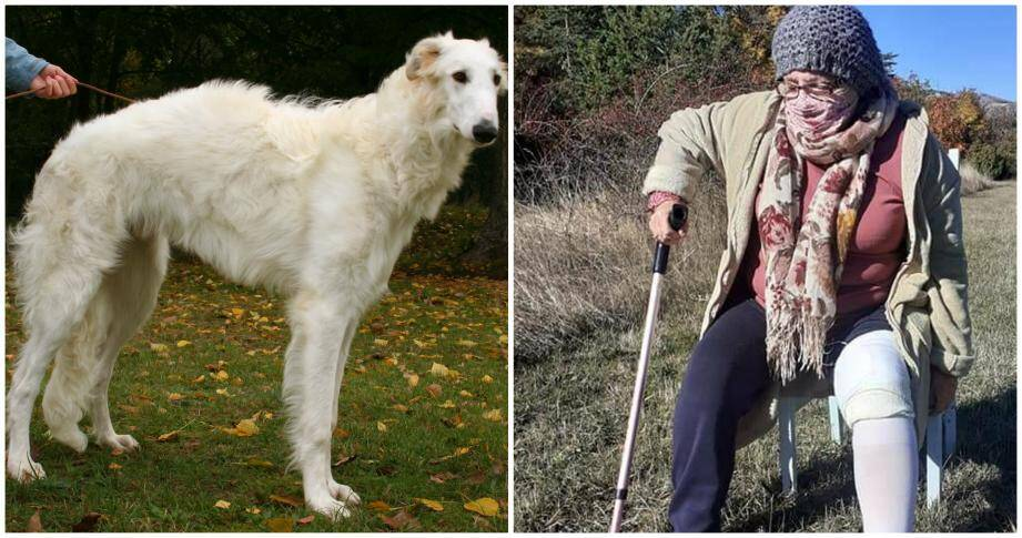 Il y a dix jours maintenant que Monique Lautier, septuagénaire caussoloise, a été laissée ensanglantée, à terre, sur le bord de la route par une personne dont le chien, un barzoï gris, venait de la déchiqueter par huit morsures profondes sur plusieurs parties du corps.