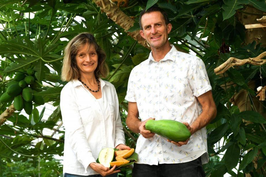 Dominique Bardin et Jean-Bernard Simian présentent leurs papayes.