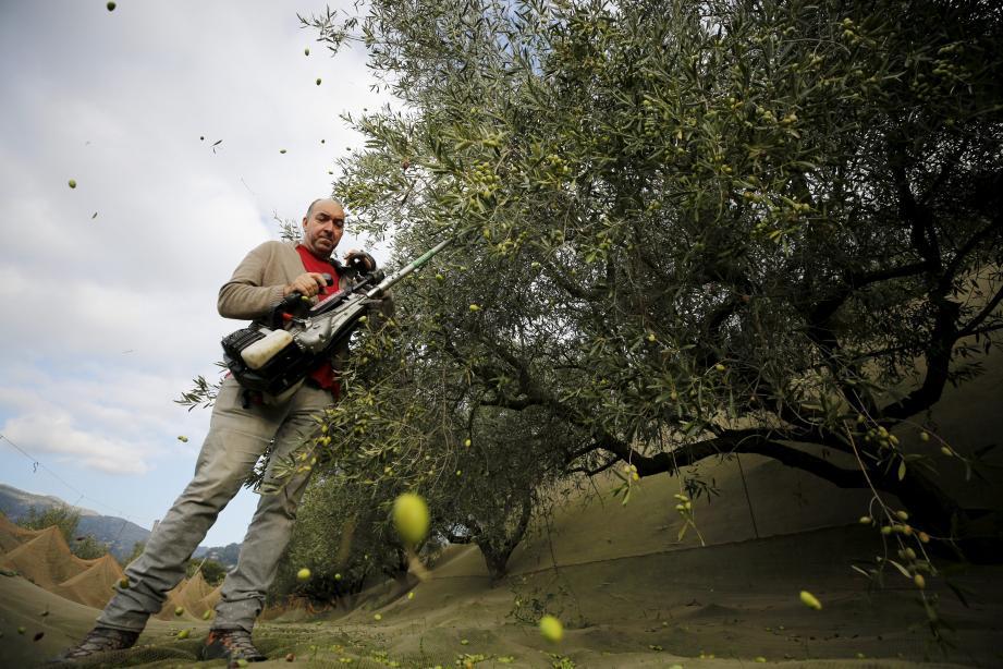 Au domaine, on trouve de tout : huile d'olive, pots de tapenade et pâtes d'olives aromatisées AOP à tous les prix.