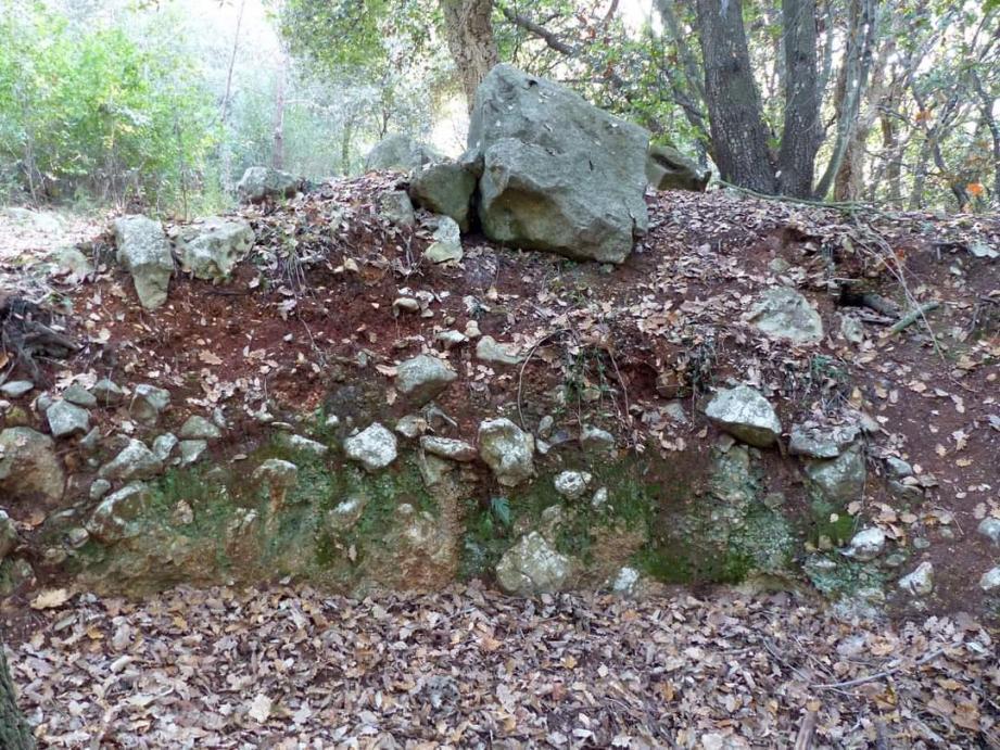 Les membres du Comité d'animation et de défense des intérêts des Semboules (CADIS) ont découvert de vieux vestiges dans la forêt. (DR)