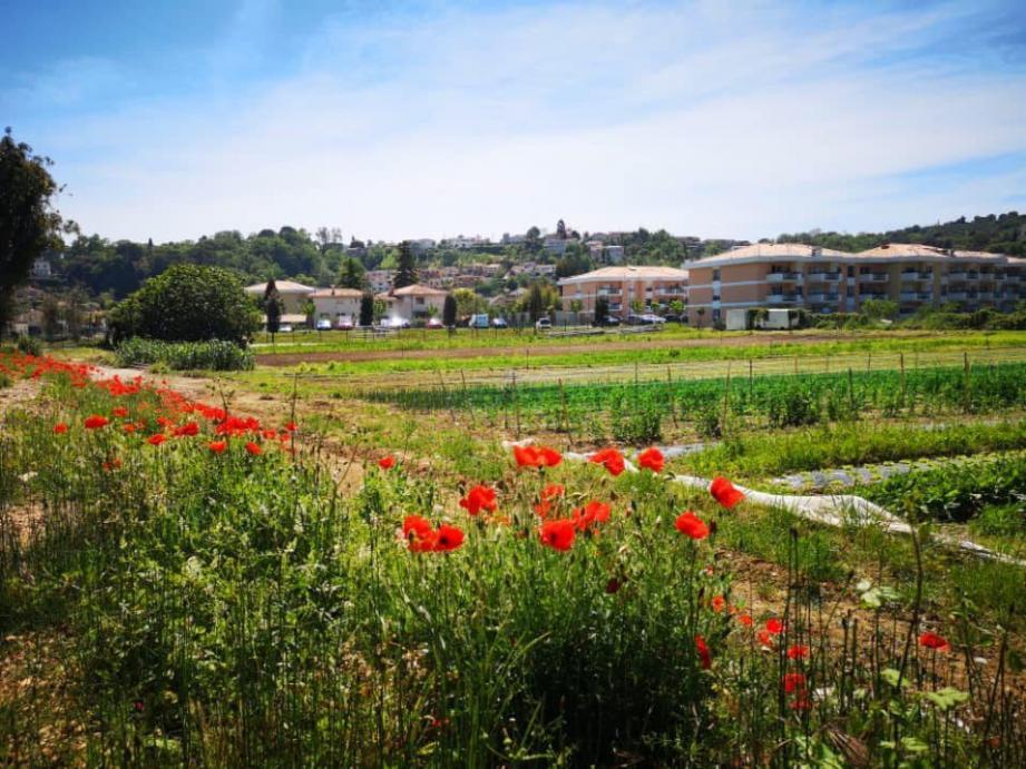 Ici, la Bastide des Plans : un programme immobilier avec des logements sociaux livrés il y a un an.