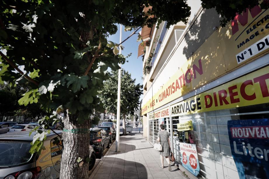 Rue de Roquebillière, le débat s'enracine autour d'un ginkgo biloba…