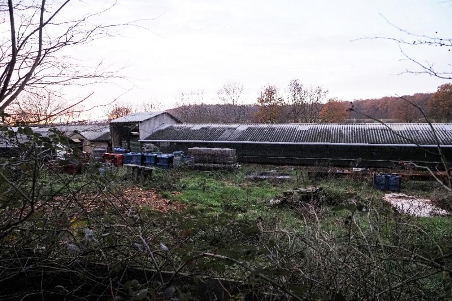 Un élevage de visons à Champrond-en-Gâtine (Eure-et-Loir), le 22 novembre 2020